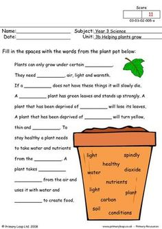 PrimaryLeap.co.uk - How do plants grow Worksheet