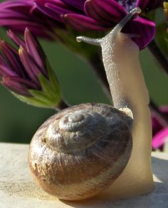 I like snails.. i dont really know why but i find them so interesting.