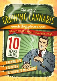 Growing Marijuana Seeds Indoors   Cannabis (weed) tips for soil