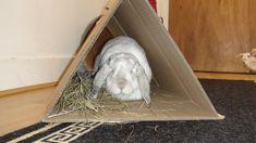 Cardboard tunnel: no need to be round Rabbit Life, Rabbit Run, House Rabbit, Bunny Rabbit, Diy Bunny Cage, Diy Bunny Toys, Bunny Cages, Bunny Care Tips, Rabbit Tunnel