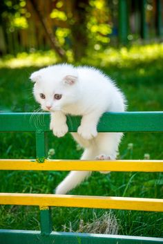HAVING A TOUGH TIME GETTING OVER THAT FENCE, AREN'T YOU FELLOW (??)…….ccp