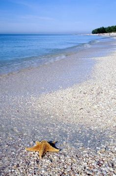 Sanibel Island, Florida. They say it's one of the best beaches to find shells! Going there some time!