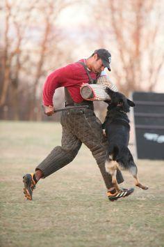 Schutzhund, Protection