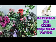 SARIMSAK İLE ÇİÇEK COŞTURAN YAP, AÇMAYAN ÇİÇEK KALMASIN, SARIMSAĞIN MÜTHİŞ ETKİSİ, SIVI BİTKİ BESİNİ - YouTube Fertilizer For Plants, Home Trends, Gardening Tips, Garlic, Youtube, How To Make, Model, Scale Model