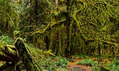 Hoh Rain Forest In USA By http://www.surprisingplaces.com