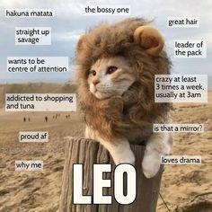Leo cat be like Leo Zodiac Facts, Zodiac Memes, Astrology Leo, Zodiac Horoscope, August Horoscope, Beth Moore, Leo Quotes, Bitch Quotes, Leo Girl