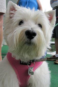 My dog Dixie. Joann, Mountain Pleasant, SC. 12/31/13.