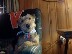 Welsh Terrier, Mr. Brooks, considering your argument...