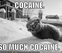 Inspiring image cat, cocaine, funny, kitty, lol - Resolution - Find the image to your taste Wtf Funny, Funny Cats, Hilarious, Funny Images, Funny Pictures, Image Cat, Gif Animé, Man Humor, Best Memes