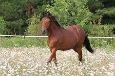 Gallery - Fina Vista Farm Paso Fino Horses