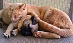 Pugs Will Sleep Anywhere! Dog Pictures, Animal Pictures, Cute Pictures, Funny Cat Photos, Funny Cats, Pug Love, I Love Cats, Dog Best Friend, Dog Boarding