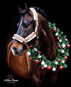 - Art Of Equitation Horses And Dogs, Cute Horses, Pretty Horses, Horse Love, Wild Horses, Beautiful Horses, Animals Beautiful, Animals And Pets, Cute Animals