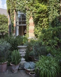 A Study in Serenity: Designer Rose Uniacke's Tranquil Terrace Garden - Gardenista The ivy-clad brick house that interior design Rose Uniacke and her film producer husband, David Heyman, bought in central London a few years back came with Conservatory Garden, Terrace Garden, Garden Pond, Green Garden, Herb Garden, Rose Uniacke, Virginia Creeper, Public Garden, Decoration Design