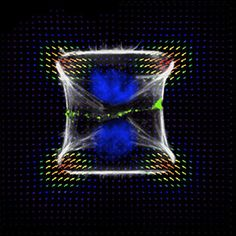 actin network mechanics, Laurent Blanchoin, Manuel Thery