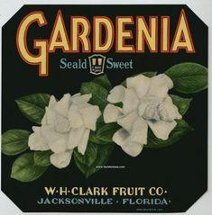 GARDENIA Vintage Florida Citrus Crate Label Beautiful! Vintage Labels, Vintage Ads, Vintage Posters, Vintage Prints, Vintage Stuff, Vintage Signs, Gardenias, Orange Crate Labels, Label Art