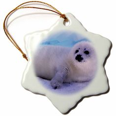 3dRose orn_74855_1 Gulf of St. Lawrence, Harp Seal CN14 GJE0027 Gavriel Jecan Snowflake Porcelain Ornament, 3-Inch *** You will love this! More info here : Wedding Decor