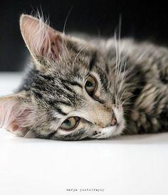 minni the cat41