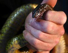 serpent le plus venimeux du monde (© Un taïpan dans les mains d'un traqueur de serpent australien - Reuters )