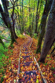 Autumn Path, Lithuania