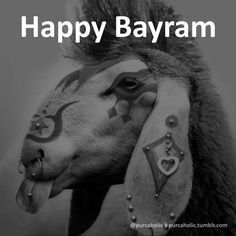 Happy Bayram :)  #kurbanbayramı #kurban #opferfest #eidaladha #eidmubarak #blessedeid #thefeastofsacrifice #feastofthesacrifice #themajorfestival #thegreatereid #islam #punk #sheep #koyun #pierced #tattooed #funny #humor #mizah #matrak #komik #augsburg #münchen #ulm #stuttgart #frankfurt #istanbul #ankara #izmir #bursa