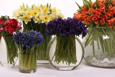 a few tips on how to make super simple, spring bulb flower arrangements