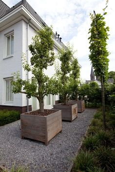 Project by TTB Smeulders, NL : pear trees in Ortelius Straight Planter by Out-Standing, Belgium.