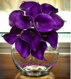 Beautiful Purple Lillies!
