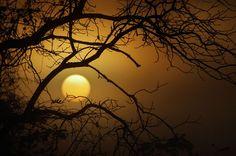 Walnut, Fog, Sun