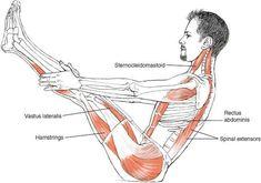 Yoga anatomy   boat pose