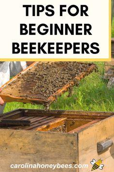 How To Start Beekeeping, Beekeeping For Beginners, Bee Equipment, Rose Tattoo On Hip, Types Of Bees, Backyard Beekeeping, Homestead Living, Great Hobbies, Garden Painting