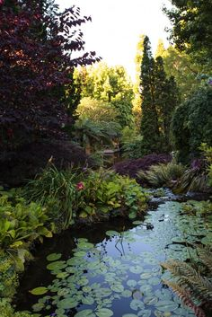 Garden Visit: Beverley McConnell's 12 Acres of Eden