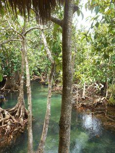 Mangrove forest. Thailand. Krabi Province. Tha Pom Khlong Song Nam Nature Park
