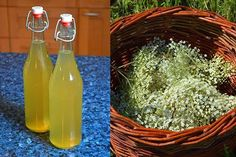This post may contain affiliate links for your convenience. Thank you for supporting Lovely Greens June signals one major event in my foraging year…Elderflowers! These creamy white umbels of sweet and fragrant flowers grow on Elder trees and later in the year will transform into earthy Elderberries. For now though, the flowers are out and … Elderberry Flower, Cordial Recipe, Elderflower Cordial, Elderberry Recipes, Gifts For Cooks, Flower Food, Wine And Liquor, Moisturizer For Dry Skin, Edible Flowers