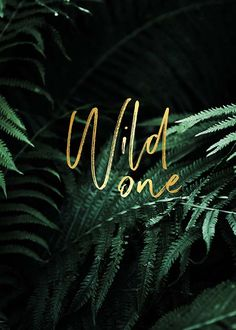 Wild one Poster in the group Posters & Prints at Desenio AB Text Poster, Gold Poster, Poster Poster, Motivation Poster, Quotes Motivation, Buy Posters Online, Feuille D'or, Modern Art Prints, Visual Identity