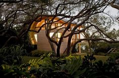 trees outside Organic Guest House with Curved Glulam Pine Beams
