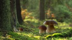 Gypsy Living, Fairies, Weapons, Stuffed Mushrooms, Low Carb, 3d, Nature, People, Summer