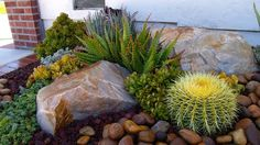 Laura Eubanks - Design for Serenity Succulent Landscaping, Landscaping With Rocks, Backyard Landscaping, Landscaping Ideas, Types Of Succulents, Cacti And Succulents, Cactus Plants, Succulent Ideas, Water Plants