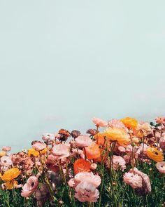 Flowers blue art flora Ideas for 2019 Summer Flowers, Wild Flowers, Beautiful Flowers, Bouquet Flowers, Colorful Flowers, Pinterest Instagram, Flower Aesthetic, Aesthetic Drawing, Orange Aesthetic