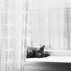 lingered upon: A cat's life