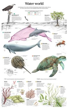 In Honor of World Oceans Day: Infographics that Explore the Deep Blue Sea