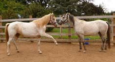 """ Snowy"" and ""Polly"" just horsing around!"