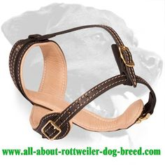Well-made Nappa Padded #Leather #Rottweiler #Muzzle for Walking $79.00 | www.all-about-rottweiler-dog-breed.com