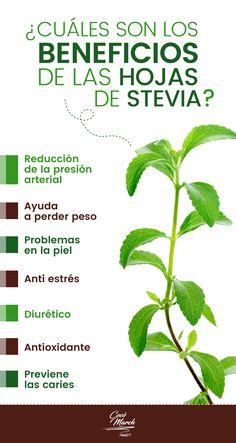 ▷ 7 Beneficios De Las Hojas De Stevia y Cómo Usarlas Stevia, Natural Garden, Natural Life, Healing Herbs, Natural Healing, Magic Herbs, Home Health Remedies, Medicinal Plants, Natural Medicine