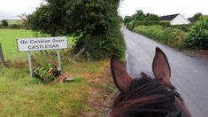 July 2019 After a long few weeks of sunshine, we were blessed with a lovely wet morning for our ride. For the best horse riding in Galway, Ireland pleas. Riding Holiday, Show Jumping, Horse Riding, Rainy Days, Trekking, Jasmine, Garden Sculpture, Ireland, Horses