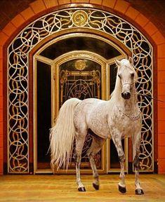 Beautiful Arabian Horses, Most Beautiful Horses, Cute Horses, Pretty Horses, Animals And Pets, Cute Animals, Arabian Beauty, Exotic Pets, Exotic Animals