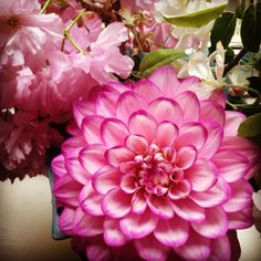 dalia flowers  Photo by Cora Mae & iPhone ;)
