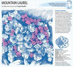 Craig Schaffer, Sketchbook3-6, mountain laurel. BERKSCOUNTRY l www.ReadingSD.org