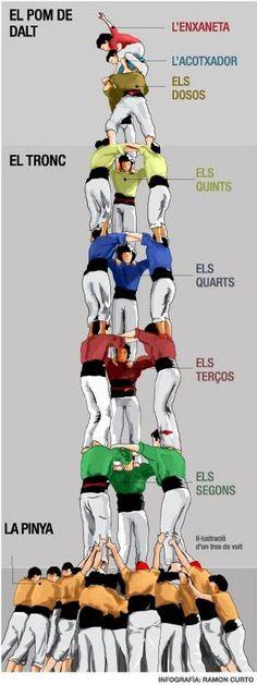 Castellers: piña, tronco, pomo de arriba. segundos, tercios, quartos, quintos, doses, levantador, enxaneta (ala del angel). tradición cultural, típica de Cataluña (España).