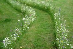 ameliacarina:Pathway of flowers- This would be fabulous for an outdoor wedding but would requite a bit of planning ahead!