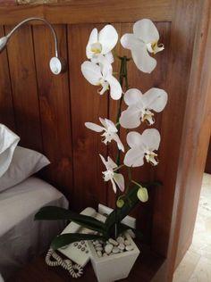 Beauty Bali, Pride, Tropical, Wreaths, Plants, Beauty, Home Decor, Beleza, Homemade Home Decor